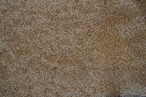 acquerello-rijst-la-colombara-vercelli-10